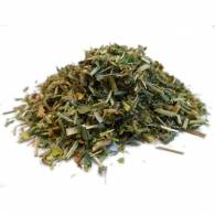 Alfalfa - Planta