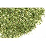 Escutelaria - Planta