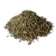Fumaria - Planta